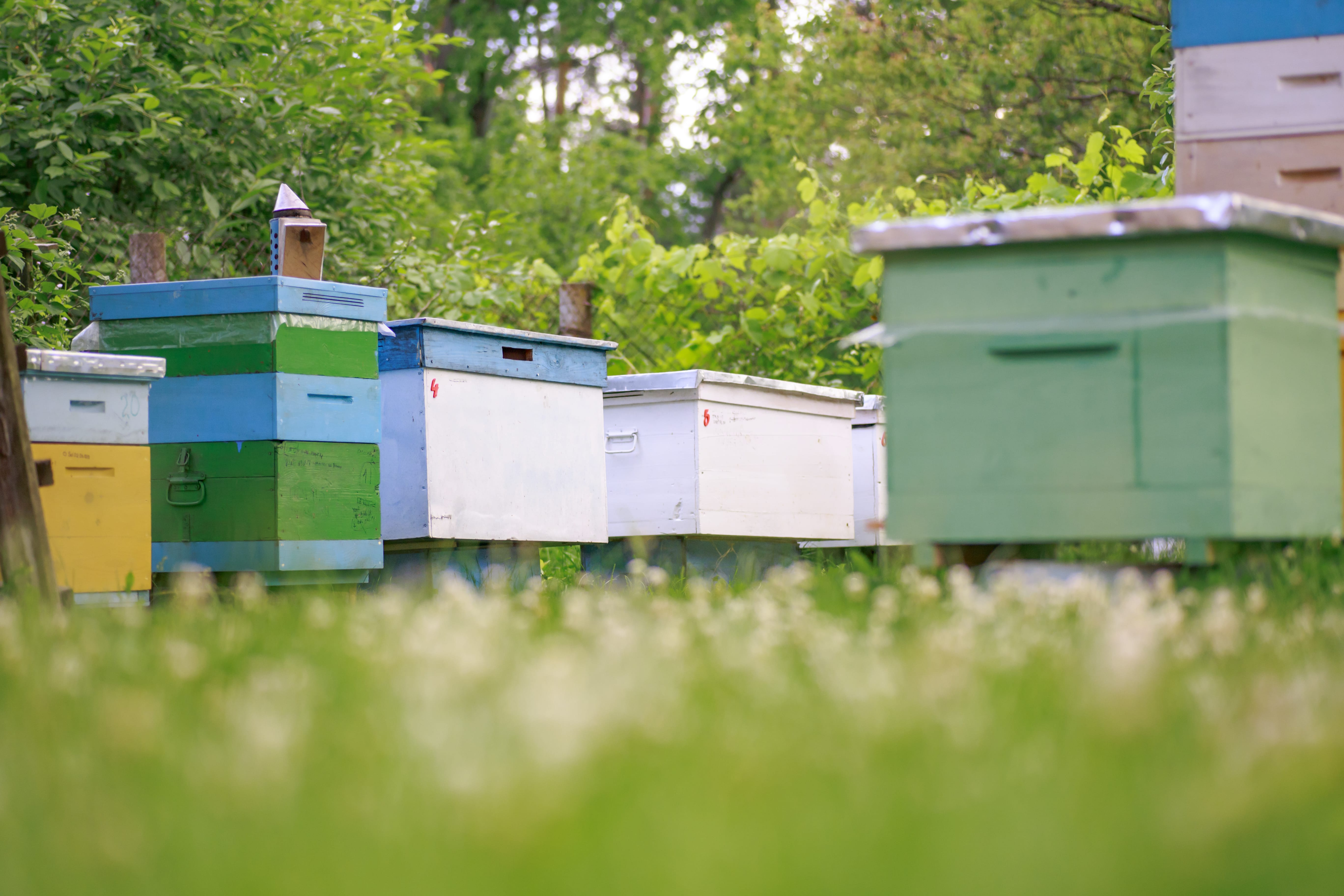 Top 15 Tips from Beekeepers