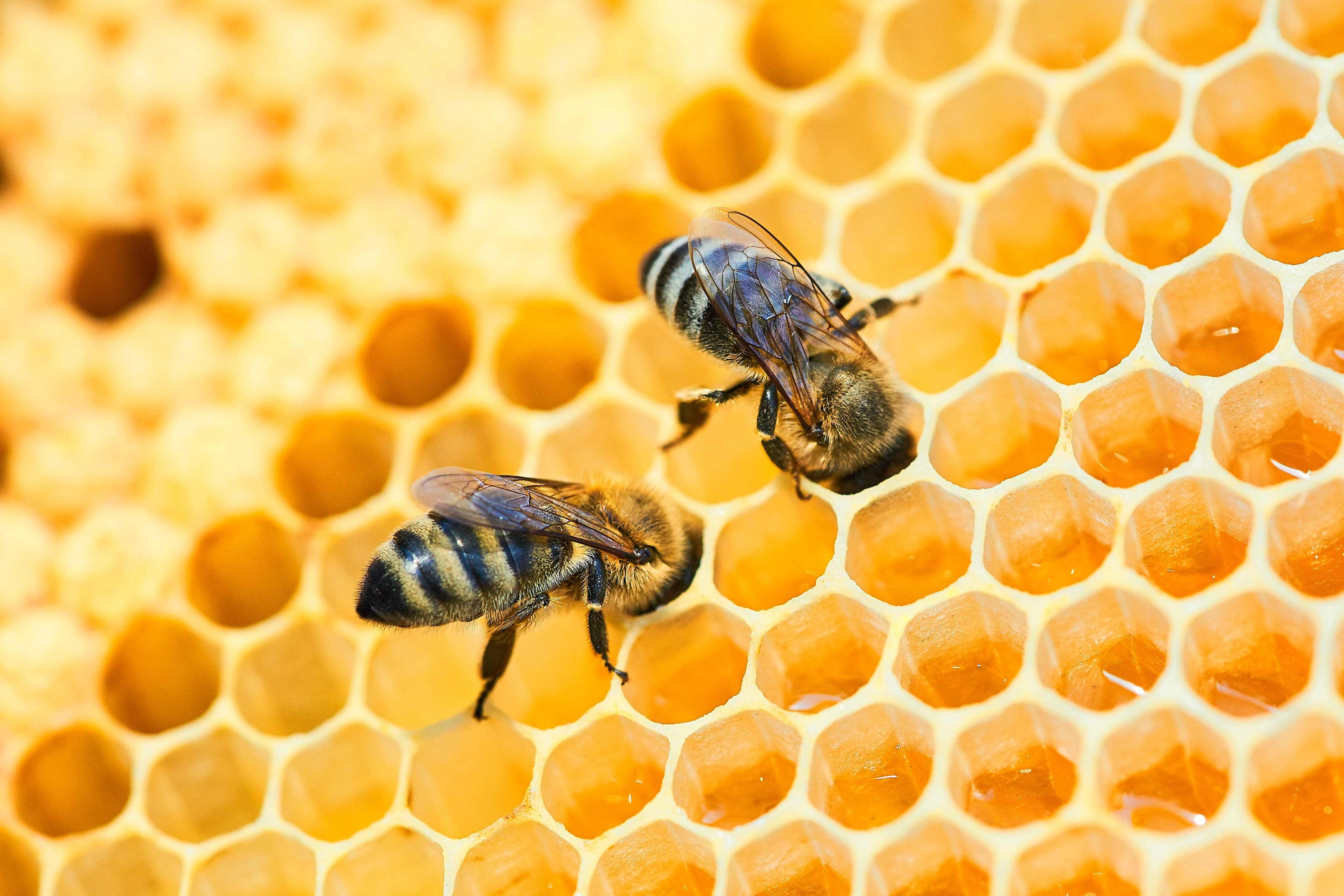 The List of the Best Bee Equipment for Your Beehive