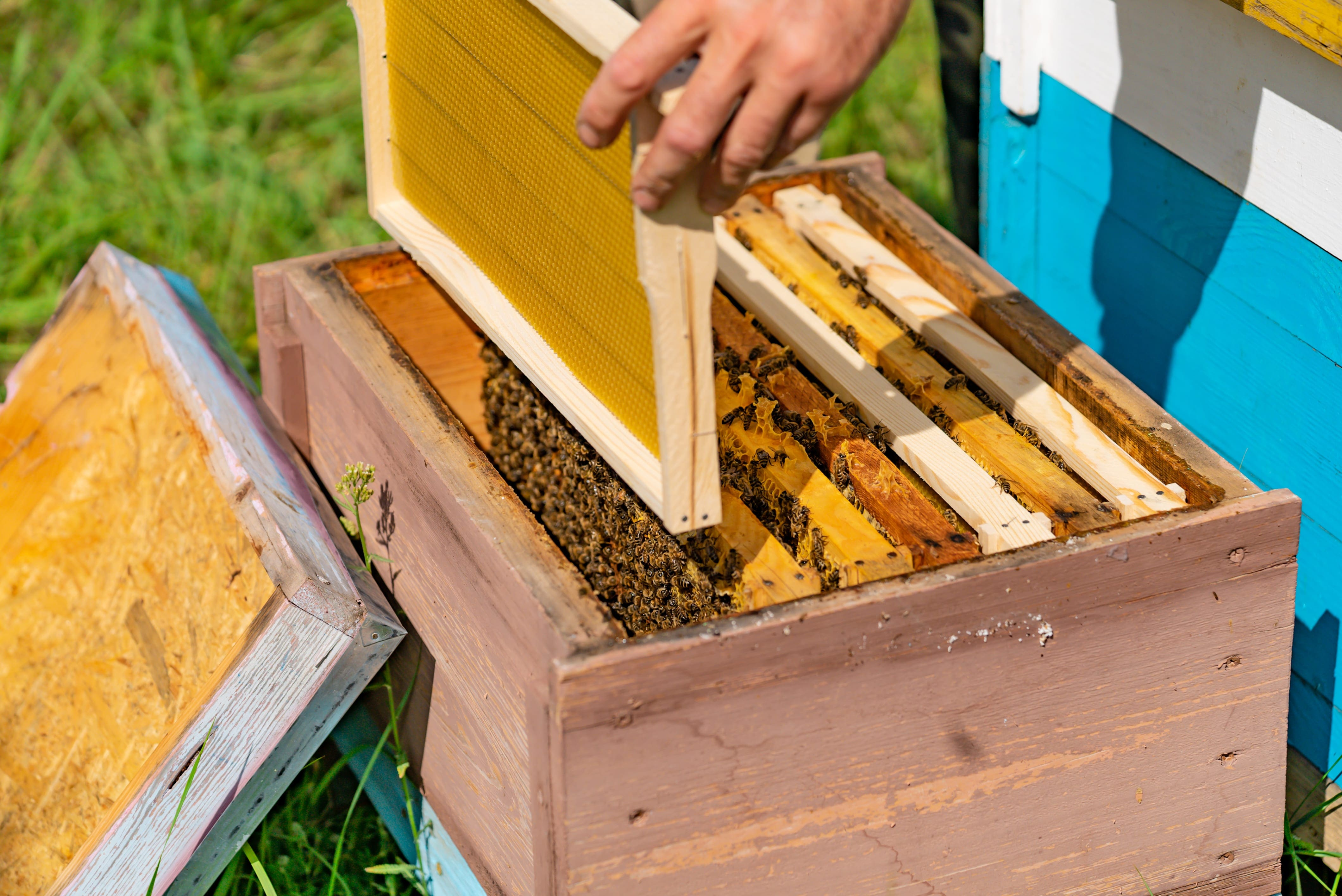 The List of the Most Essential Equipment for Every Beekeeper